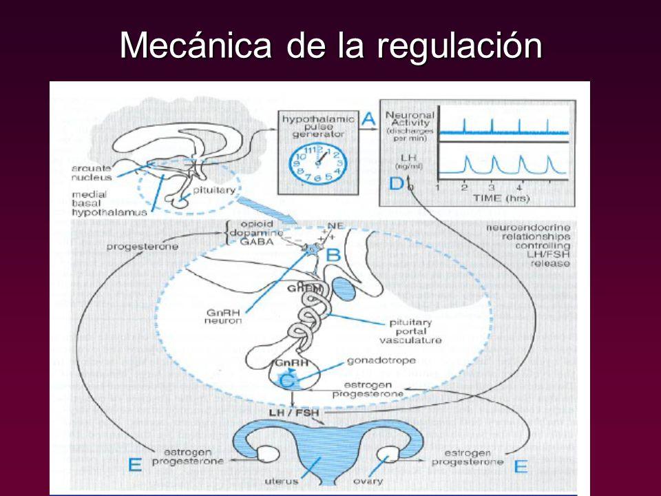 Mecánica de la regulación