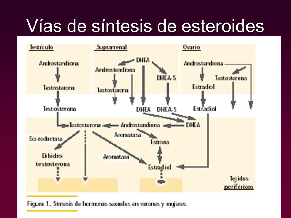 Síntesis de hormonas estereoidales Precursor básico COLESTEROL producido por todos los órganos con capacidad esteroidogénica, excepto por la placenta, que emplea lipoproteínas LDL circulantes en sangre.