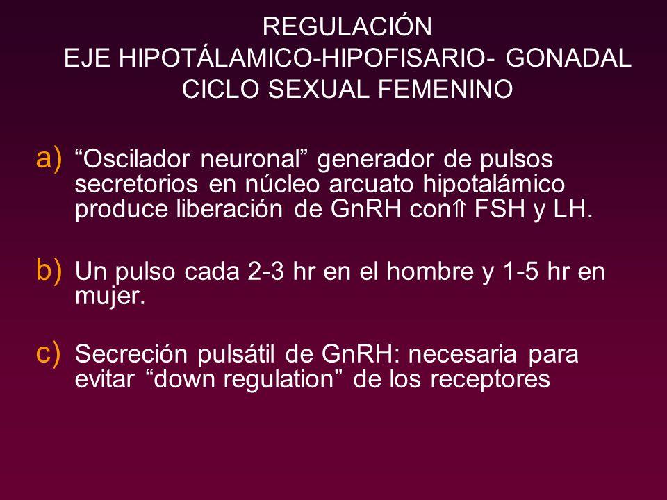 REGULACIÓN EJE HIPOTÁLAMICO-HIPOFISARIO- GONADAL CICLO SEXUAL FEMENINO a) Oscilador neuronal generador de pulsos secretorios en núcleo arcuato hipotal