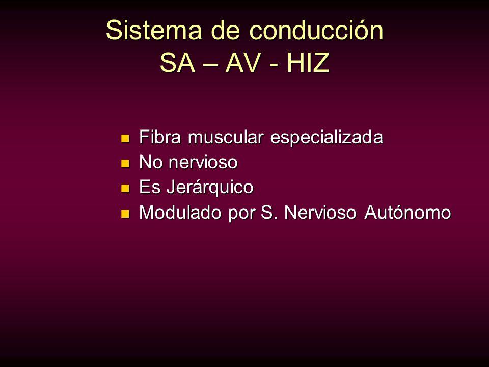 Sistema de conducción SA – AV - HIZ Fibra muscular especializada Fibra muscular especializada No nervioso No nervioso Es Jerárquico Es Jerárquico Modu