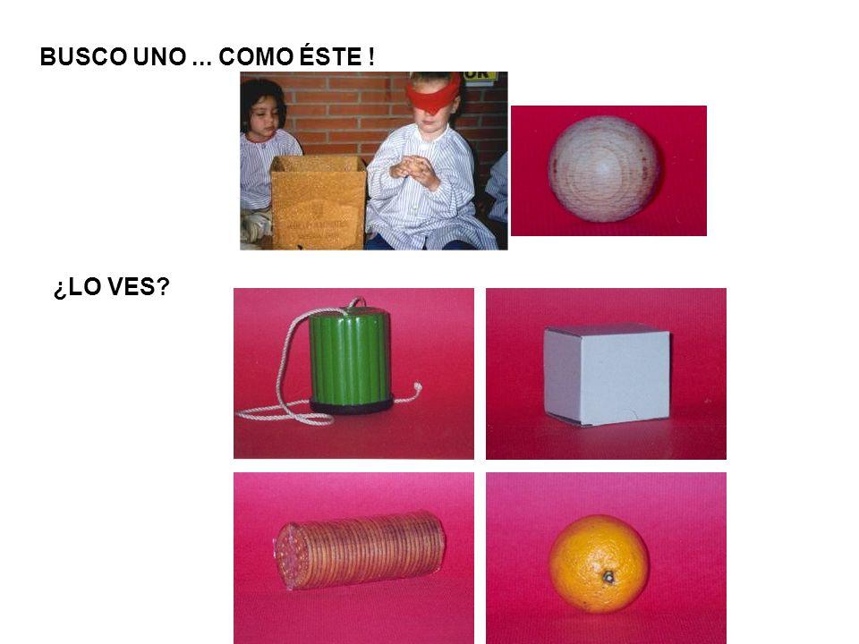 Geometria en la naturaleza (C.1) Las frutas.