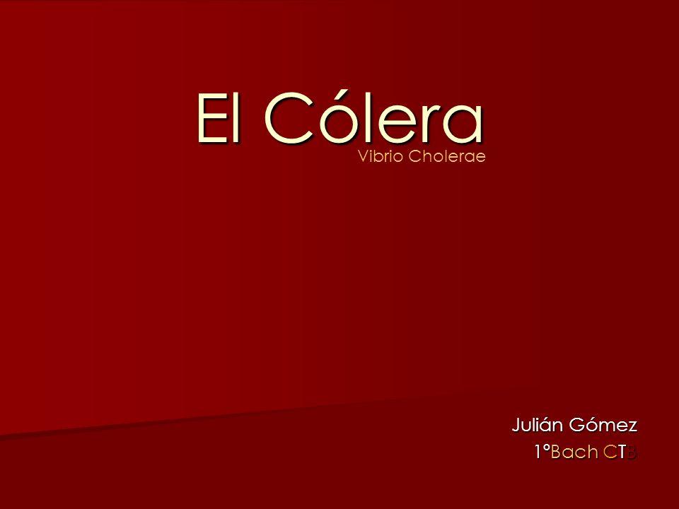 El Cólera Julián Gómez 1ºBach CTB Vibrio Cholerae