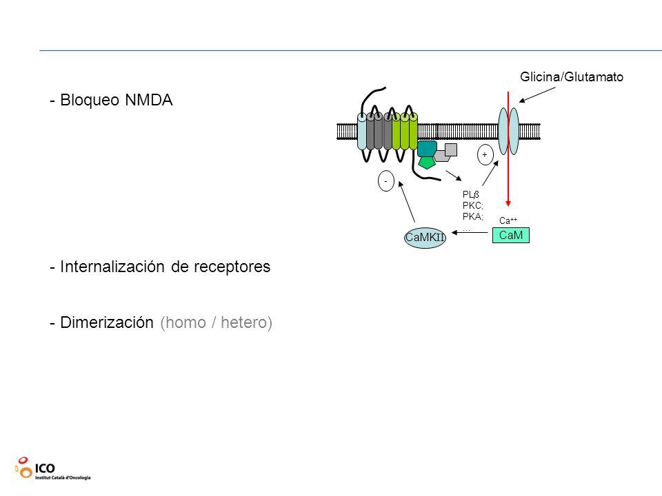 -28- Institut Català dOncologia - Bloqueo NMDA - Internalización de receptores - Dimerización (homo / hetero) PL PKC; PKA;... + Ca ++ CaM CaMK II - Gl