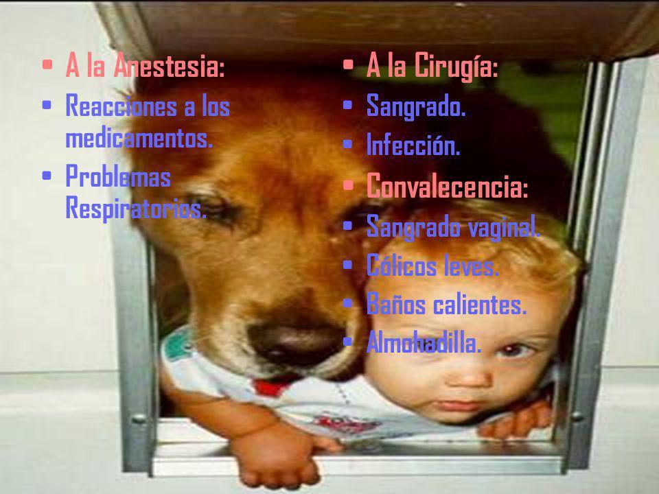 RIESGOS Riesgo Quirúrgico: Sangrado excesivo. Infección del Útero o trompas de Falopio. Daño al Útero o cuello uterino. Sufrimiento emocional. Riesgo