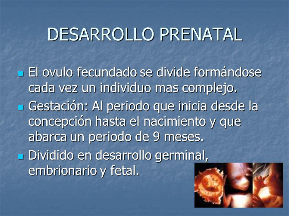 DESARROLLO PRENATAL El ovulo fecundado se divide formándose cada vez un individuo mas complejo. El ovulo fecundado se divide formándose cada vez un in