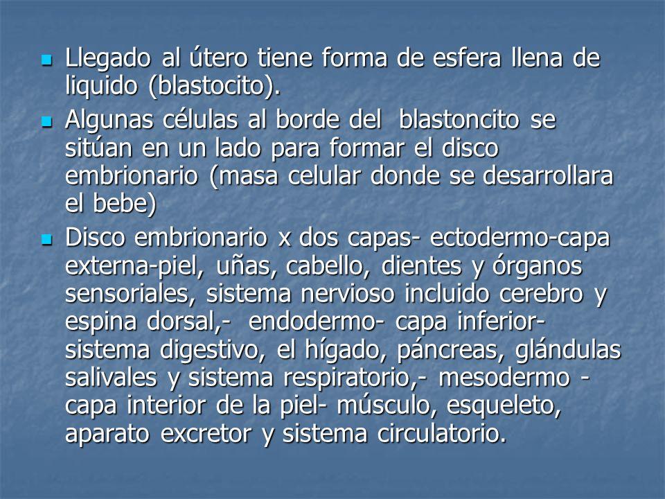 Otras partes del blastoncito que ayudan a nutrir son: Otras partes del blastoncito que ayudan a nutrir son: La placenta conectada al embrión por medio del cordón umbilical que le suministra oxigeno, nutrientes y retira desechos- produce las hormonas del embarazo, prepara los senos de la madre y controla las contracciones uterinas.