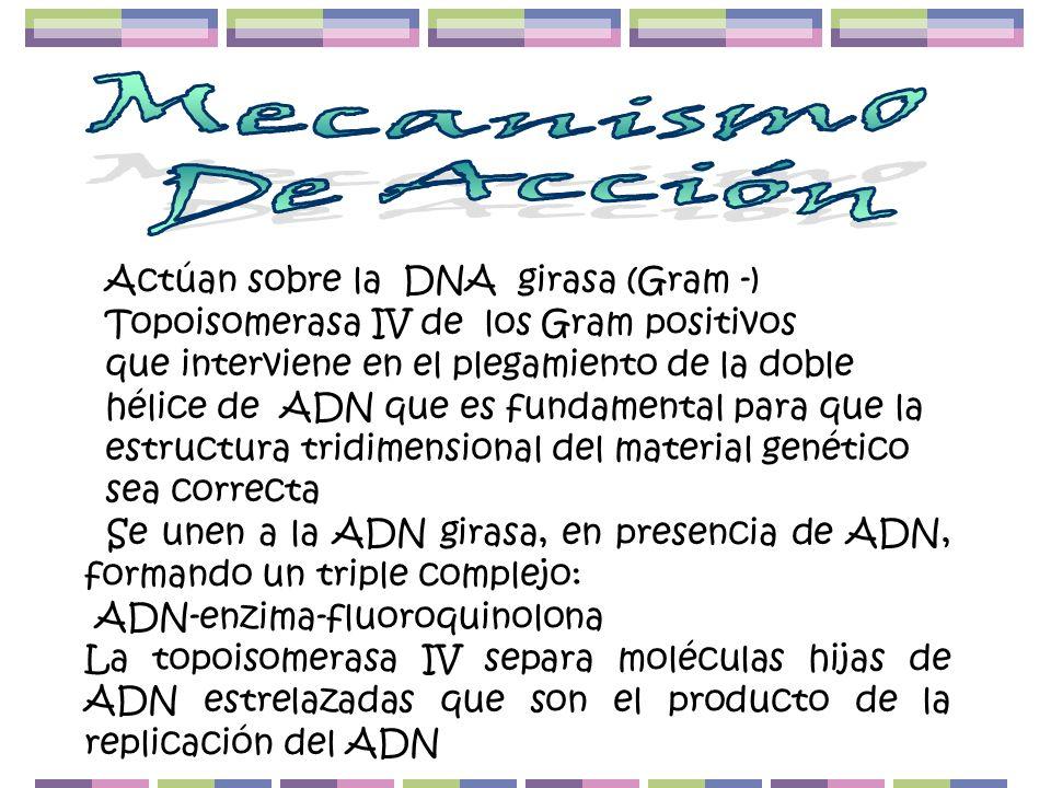 Actúan sobre la DNA girasa (Gram -) Topoisomerasa IV de los Gram positivos que interviene en el plegamiento de la doble hélice de ADN que es fundament