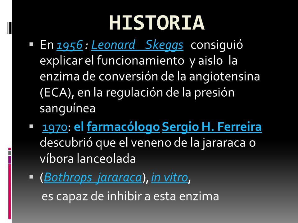 HISTORIA 19561956 : Leonard Skeggs En 1956 : Leonard Skeggs consiguió explicar el funcionamiento y aislo la enzima de conversión de la angiotensina (E
