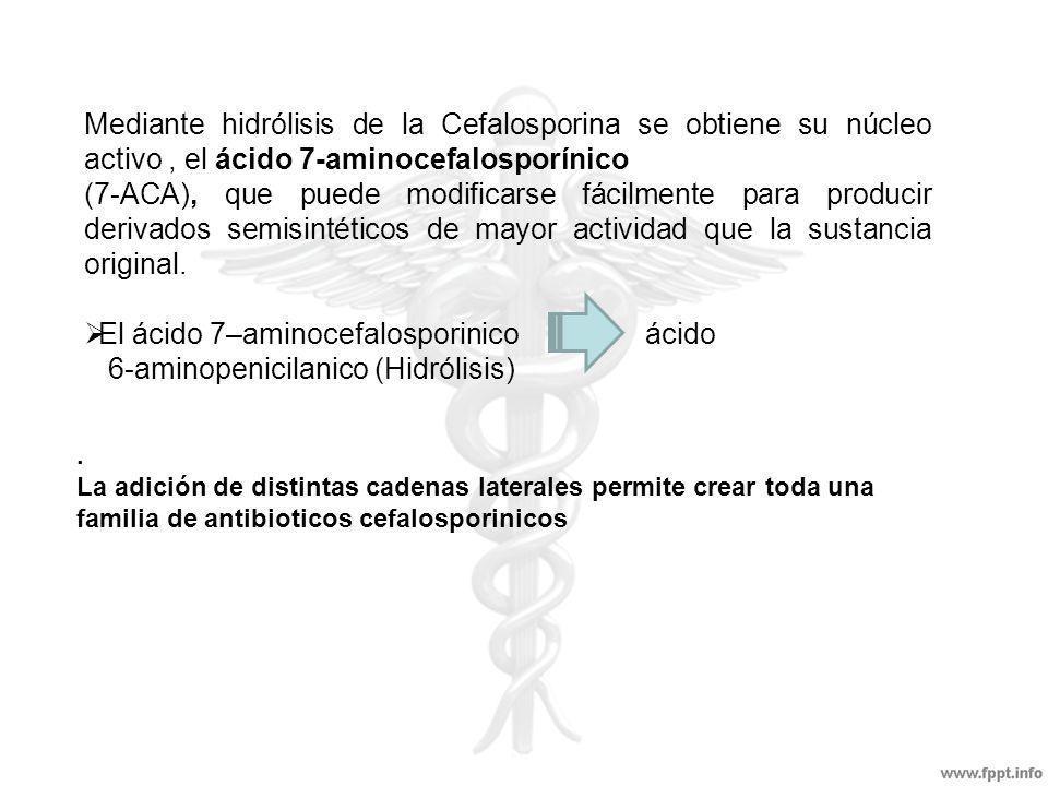 Cefalosporinas de segunda GENERACION Cefamandol activos para especies de enterobacter, proteus indol + y klebsiella.