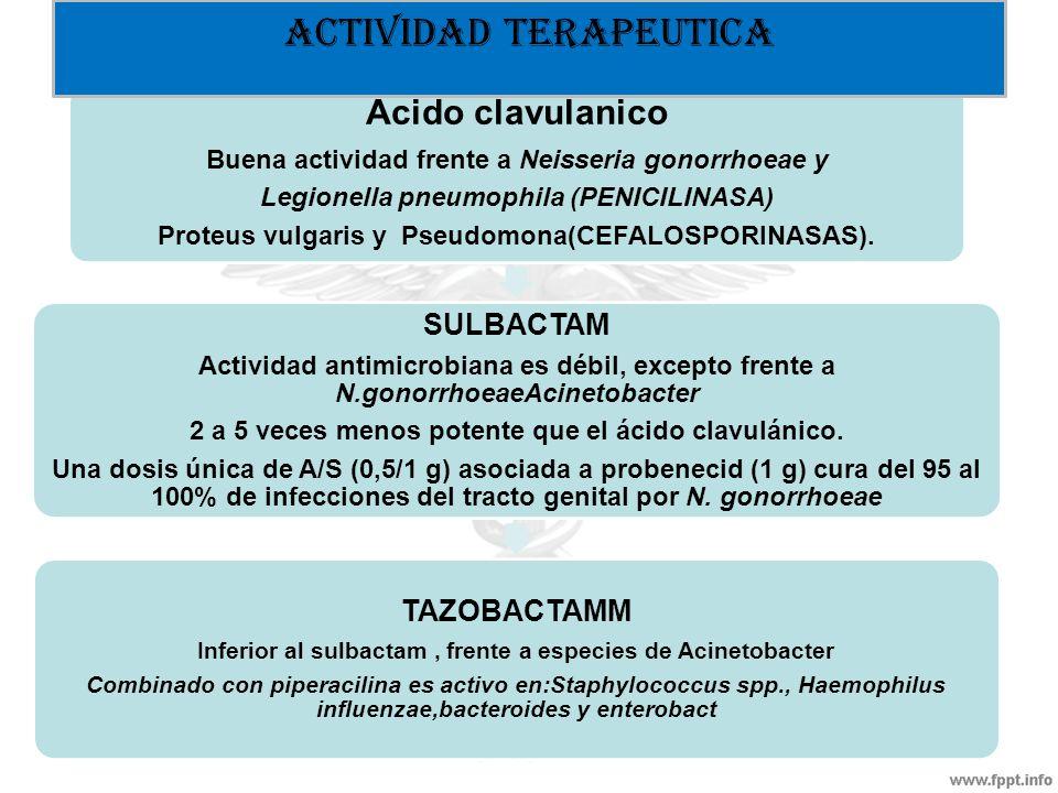 Acido clavulanico Buena actividad frente a Neisseria gonorrhoeae y Legionella pneumophila (PENICILINASA) Proteus vulgaris y Pseudomona(CEFALOSPORINASA