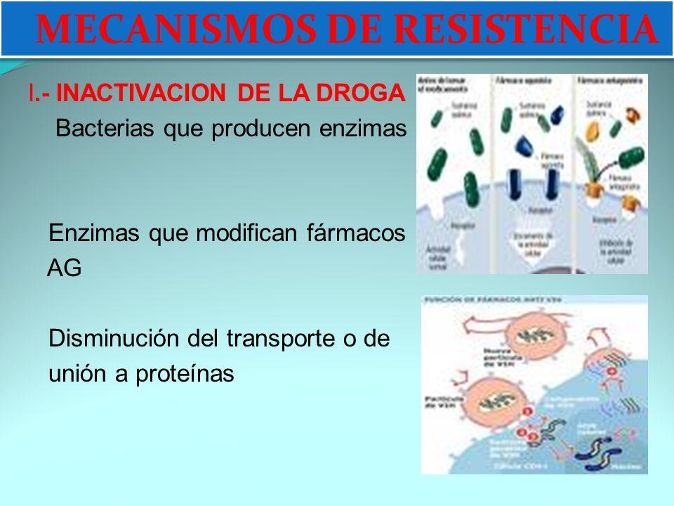 MECANISMOS DE RESISTENCIA I.- INACTIVACION DE LA DROGA Bacterias que producen enzimas Enzimas que modifican fármacos AG Disminución del transporte o de unión a proteínas MECANISMOS DE RESISTENCIA