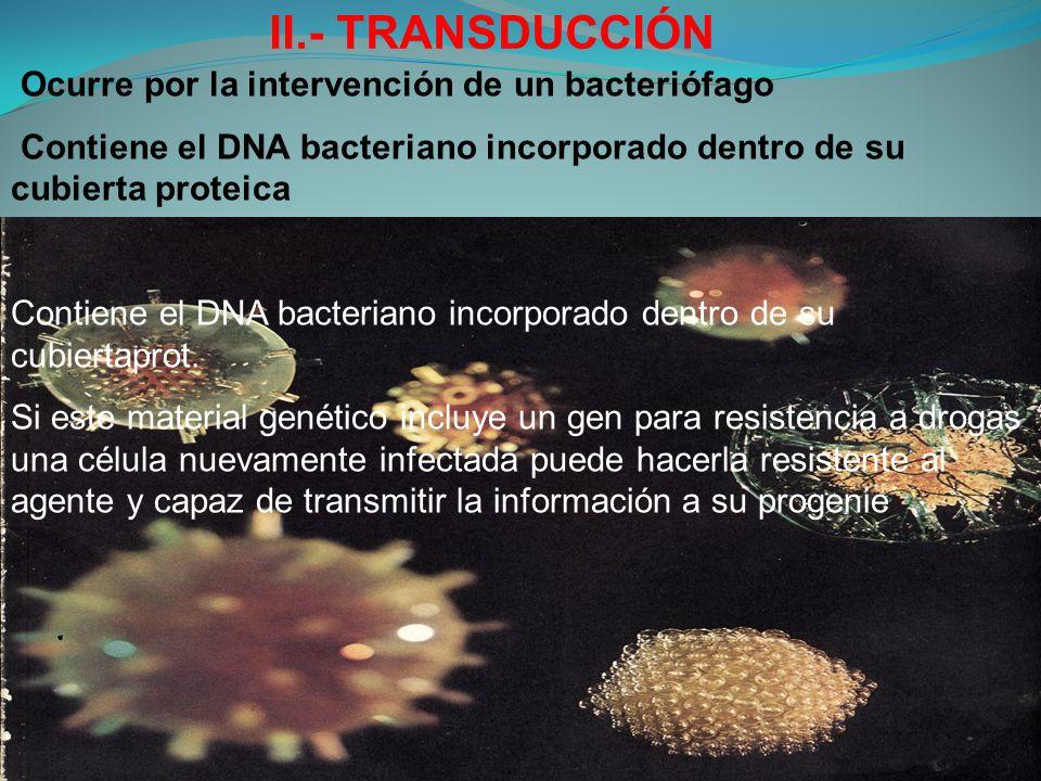 II.- TRANSDUCCIÓN Ocurre por la intervención de un bacteriófago Contiene el DNA bacteriano incorporado dentro de su cubierta proteica Contiene el DNA