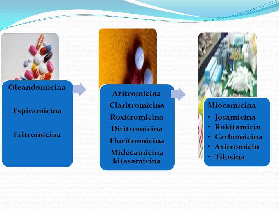 Oleandomicina Espiramicina Eritromicina Azitromicina Claritromicina Roxitromicina Diritromicina Fluritromicina Midecamicina kitasamicina Miocamicina J