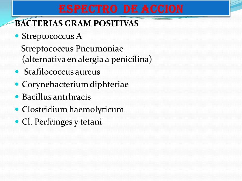 BACTERIAS GRAM POSITIVAS Streptococcus A Streptococcus Pneumoniae (alternativa en alergia a penicilina) Stafilococcus aureus Corynebacterium diphteria