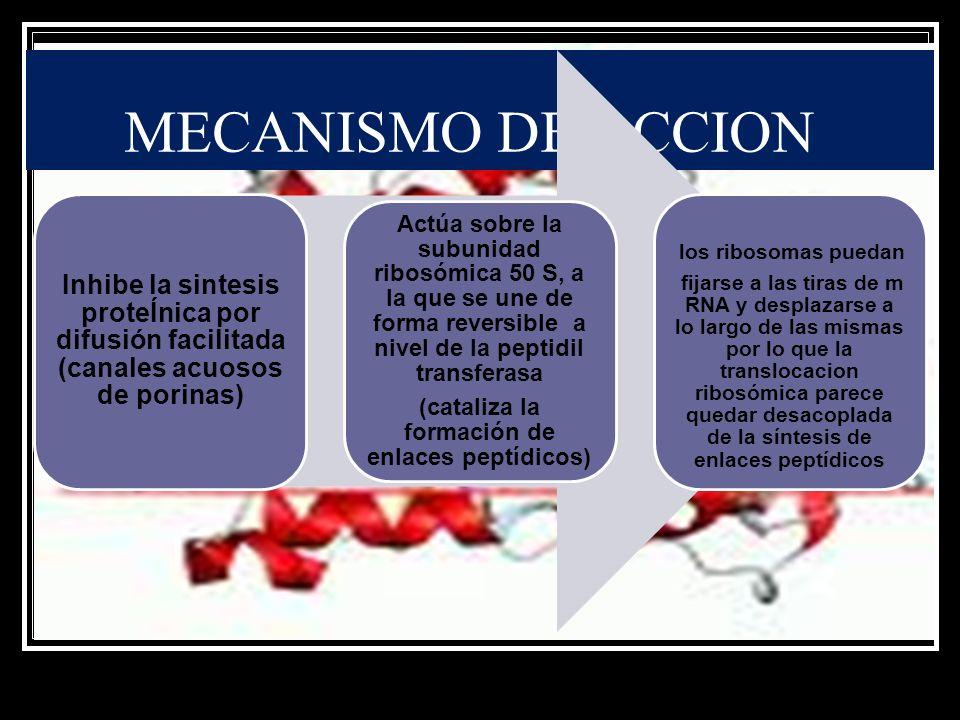 MECANISMO DE ACCION Inhibe la sintesis proteÍnica por difusión facilitada (canales acuosos de porinas) Actúa sobre la subunidad ribosómica 50 S, a la