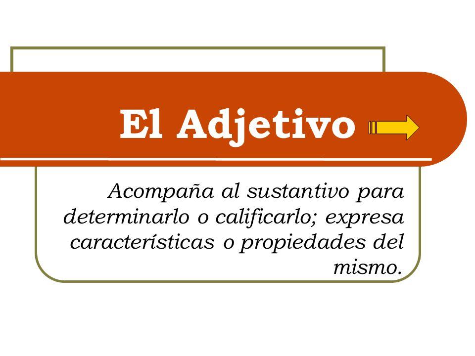 Clasificación de los adjetivos Posesivos: establecen que un ser o una cosa pertenecen a alguien o a algo.