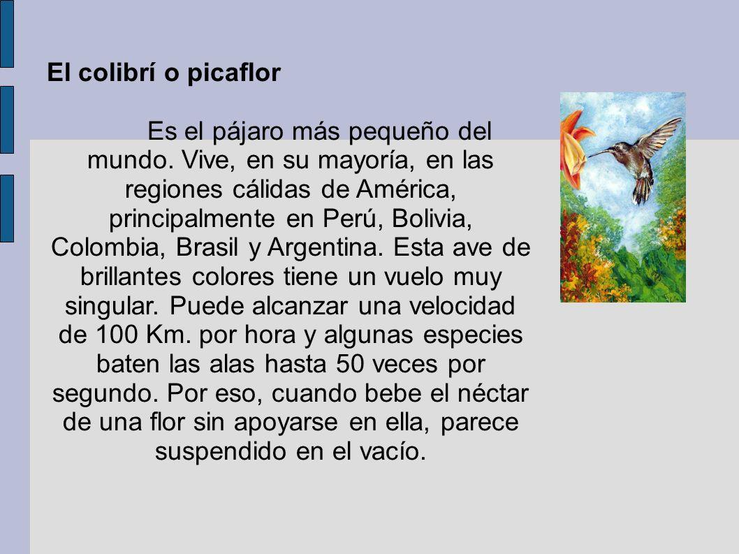 El colibrí o picaflor Es el pájaro más pequeño del mundo. Vive, en su mayoría, en las regiones cálidas de América, principalmente en Perú, Bolivia, Co