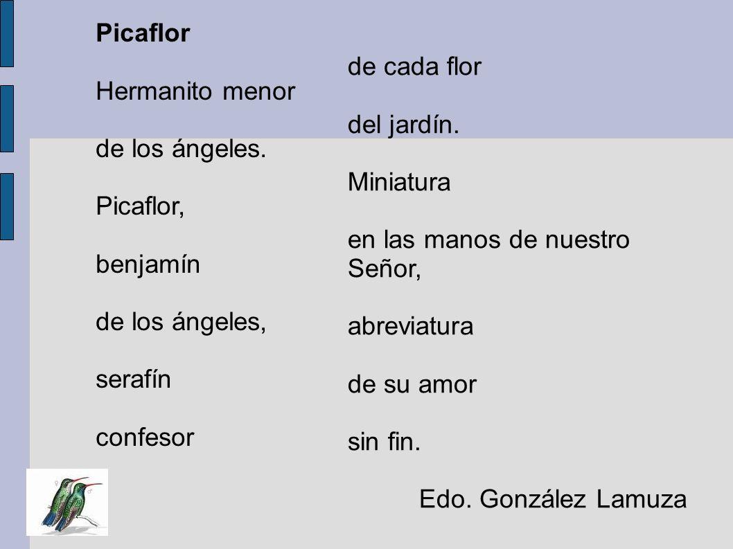 Picaflor Hermanito menor de los ángeles. Picaflor, benjamín de los ángeles, serafín confesor de cada flor del jardín. Miniatura en las manos de nuestr