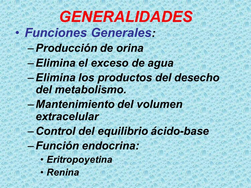GENERALIDADES Funciones Generales : –Producción de orina –Elimina el exceso de agua –Elimina los productos del desecho del metabolismo. –Mantenimiento
