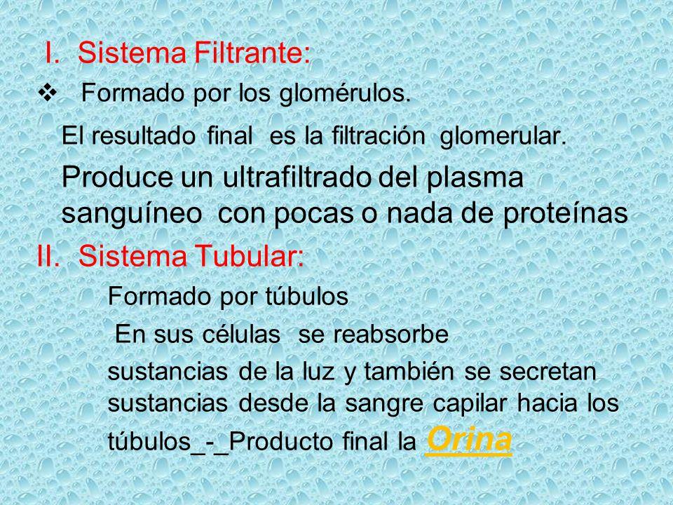 I. Sistema Filtrante: Formado por los glomérulos. El resultado final es la filtración glomerular. Produce un ultrafiltrado del plasma sanguíneo con po