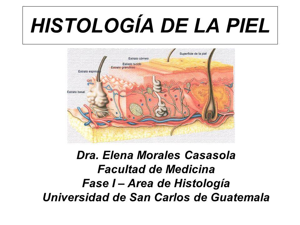 HISTOLOGÍA DE LA PIEL Dra. Elena Morales Casasola Facultad de Medicina Fase I – Area de Histología Universidad de San Carlos de Guatemala
