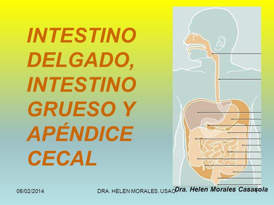 06/02/2014DRA. HELEN MORALES, USAC.1 INTESTINO DELGADO, INTESTINO GRUESO Y APÉNDICE CECAL Dra. Helen Morales Casasola