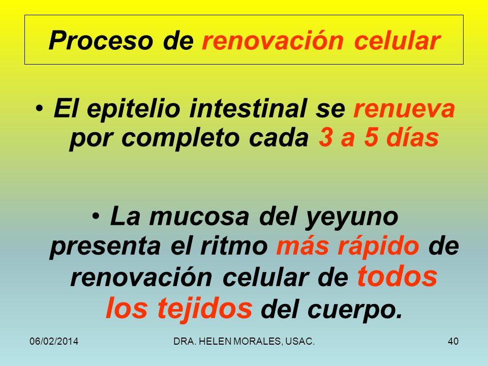 06/02/2014DRA. HELEN MORALES, USAC.40 Proceso de renovación celular El epitelio intestinal se renueva por completo cada 3 a 5 días La mucosa del yeyun