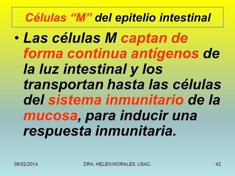 06/02/2014DRA. HELEN MORALES, USAC.42 Las células M captan de forma continua antígenos de la luz intestinal y los transportan hasta las células del si