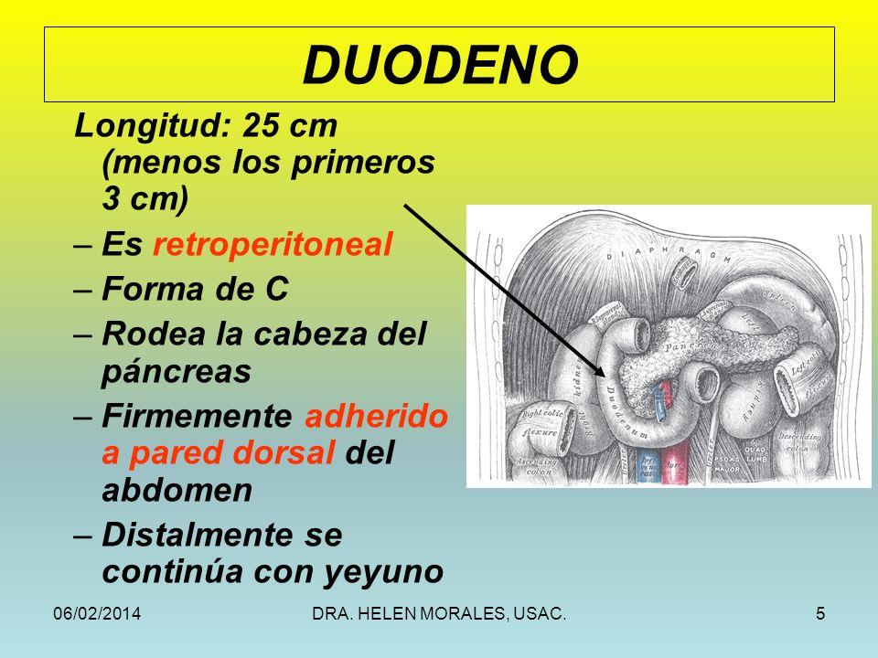 06/02/2014DRA. HELEN MORALES, USAC.5 Longitud: 25 cm (menos los primeros 3 cm) –Es retroperitoneal –Forma de C –Rodea la cabeza del páncreas –Firmemen