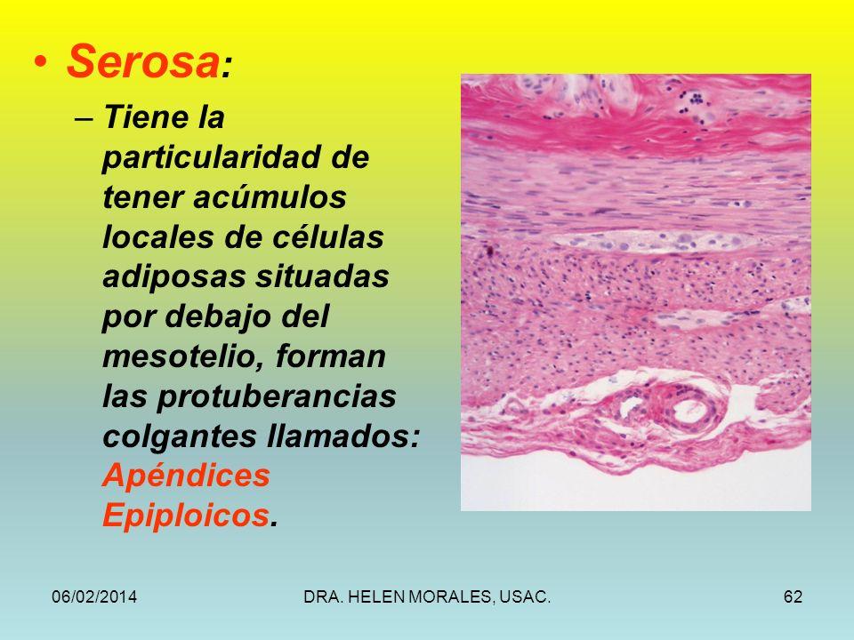 06/02/2014DRA. HELEN MORALES, USAC.62 Serosa : –Tiene la particularidad de tener acúmulos locales de células adiposas situadas por debajo del mesoteli