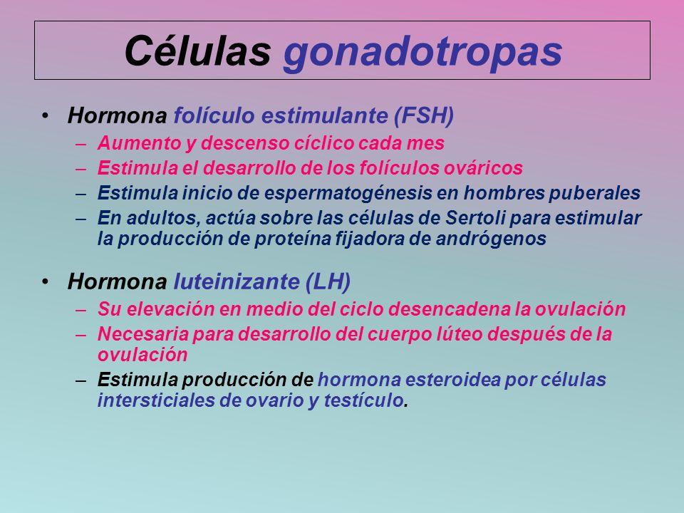 Hormona folículo estimulante (FSH) –Aumento y descenso cíclico cada mes –Estimula el desarrollo de los folículos ováricos –Estimula inicio de espermat