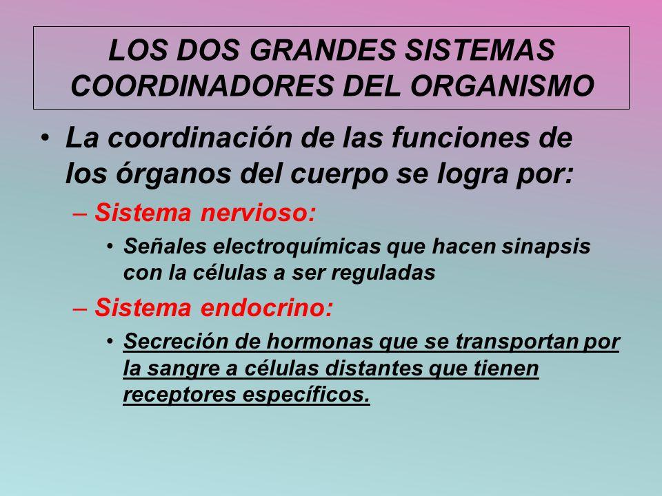 LOS DOS GRANDES SISTEMAS COORDINADORES DEL ORGANISMO La coordinación de las funciones de los órganos del cuerpo se logra por: –Sistema nervioso: Señal