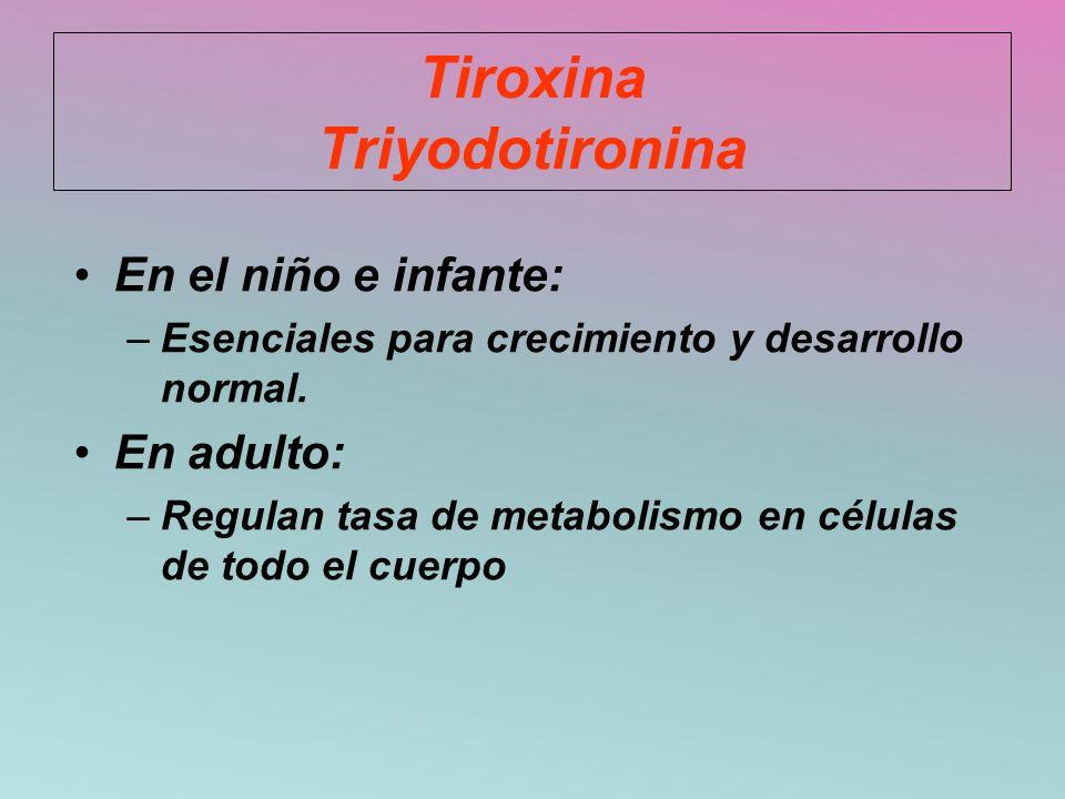 Tiroxina Triyodotironina En el niño e infante: –Esenciales para crecimiento y desarrollo normal. En adulto: –Regulan tasa de metabolismo en células de