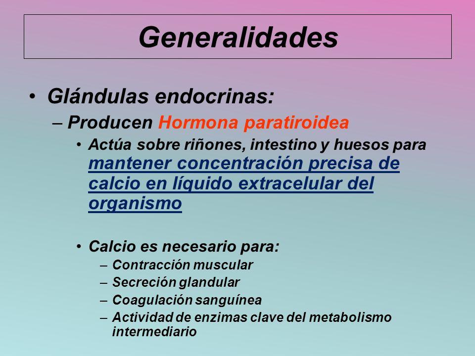 Generalidades Glándulas endocrinas: –Producen Hormona paratiroidea Actúa sobre riñones, intestino y huesos para mantener concentración precisa de calc