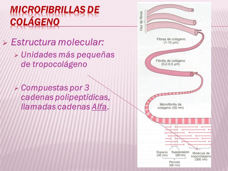 Estructura molecular: Unidades más pequeñas de tropocolágeno Compuestas por 3 cadenas polipeptídicas, llamadas cadenas Alfa.