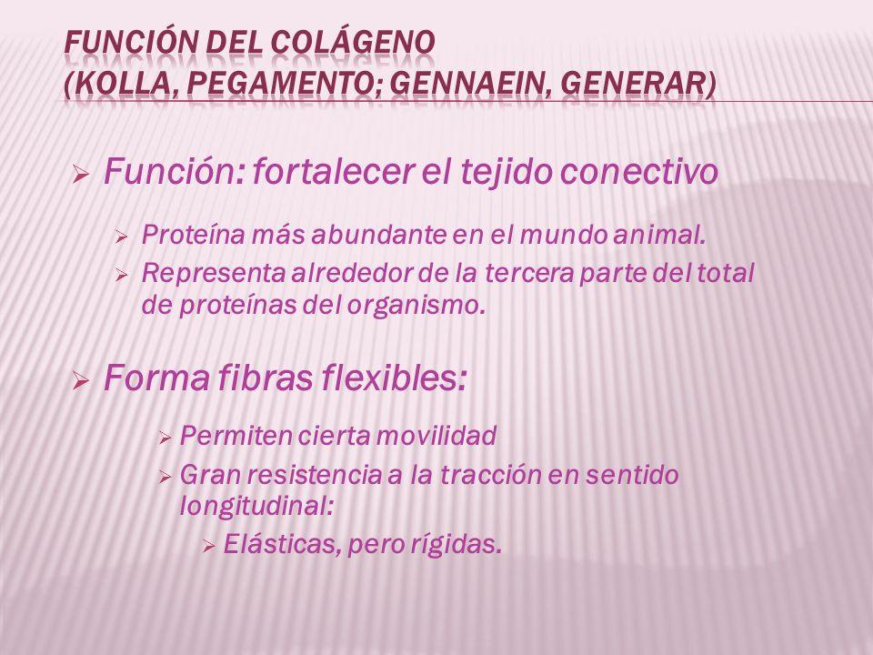 Función: fortalecer el tejido conectivo Proteína más abundante en el mundo animal. Representa alrededor de la tercera parte del total de proteínas del