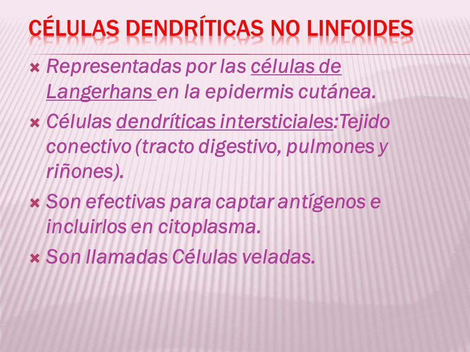 Representadas por las células de Langerhans en la epidermis cutánea. Células dendríticas intersticiales:Tejido conectivo (tracto digestivo, pulmones y