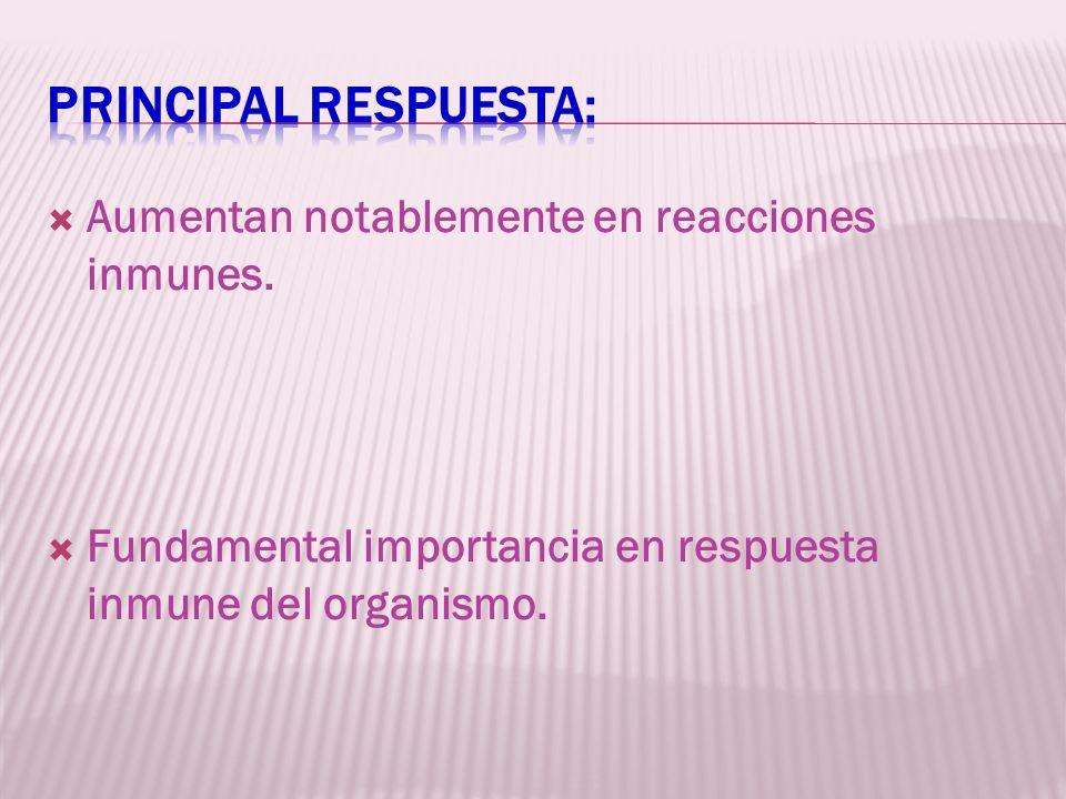 Aumentan notablemente en reacciones inmunes. Fundamental importancia en respuesta inmune del organismo.
