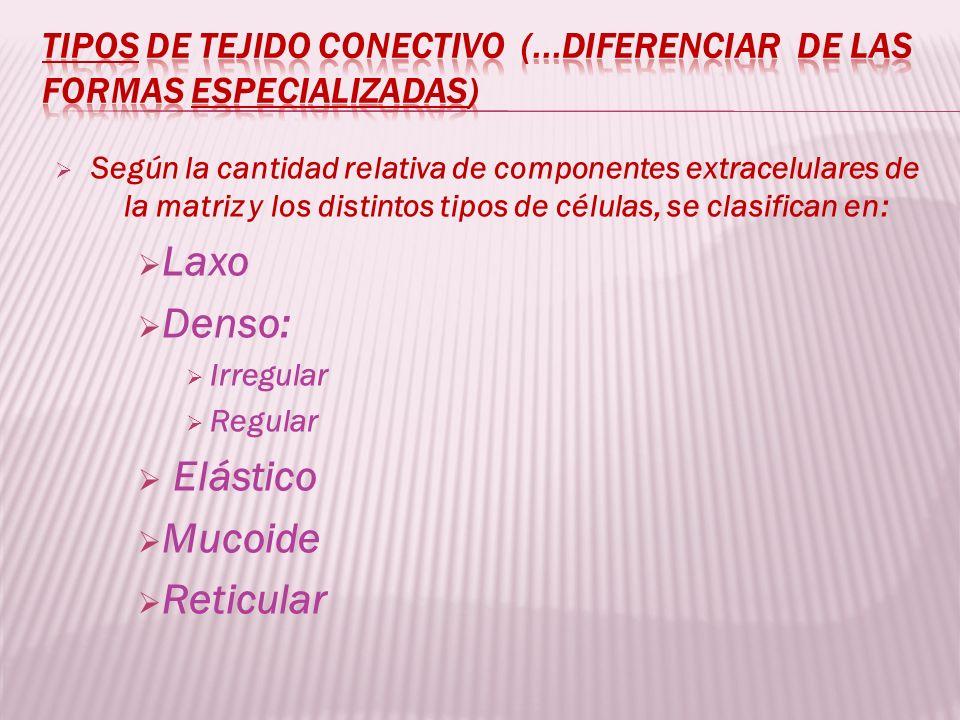 Según la cantidad relativa de componentes extracelulares de la matriz y los distintos tipos de células, se clasifican en: Laxo Denso: Irregular Regula