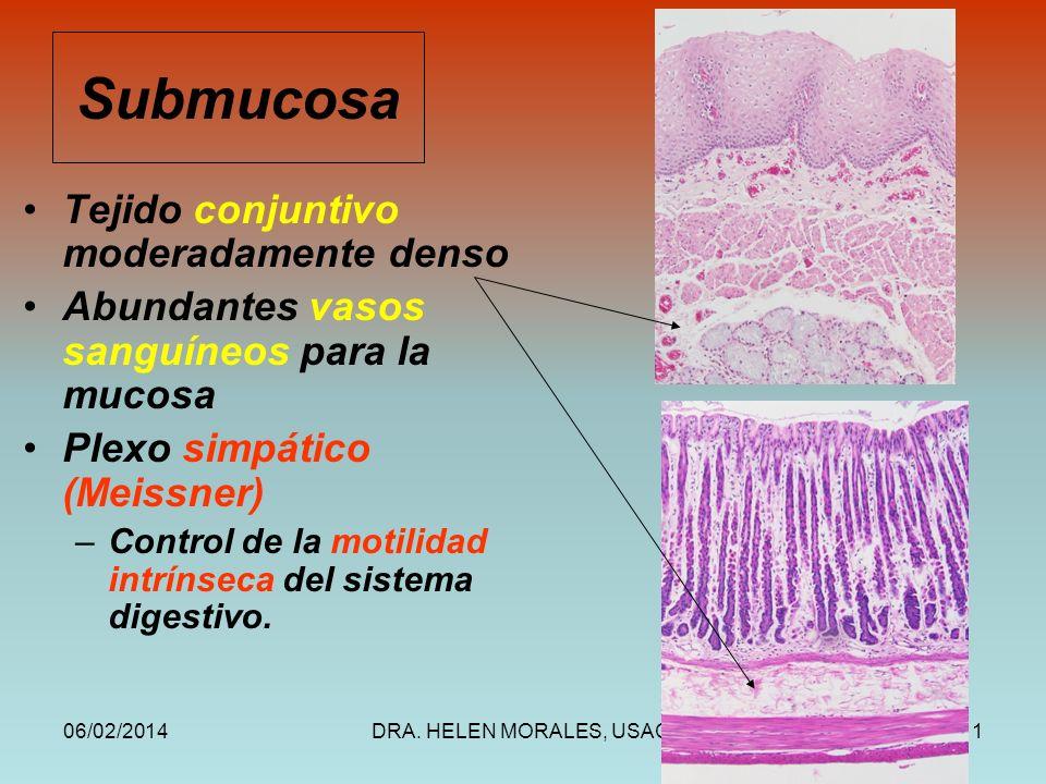 06/02/2014DRA. HELEN MORALES, USAC.11 Submucosa Tejido conjuntivo moderadamente denso Abundantes vasos sanguíneos para la mucosa Plexo simpático (Meis