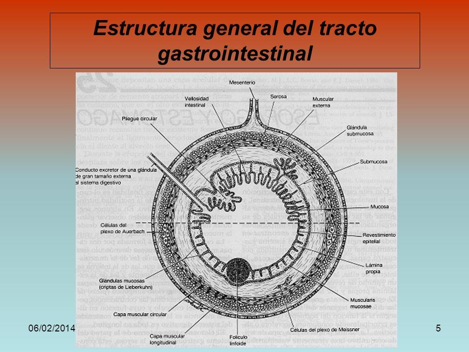 06/02/2014DRA. HELEN MORALES, USAC.5 Estructura general del tracto gastrointestinal