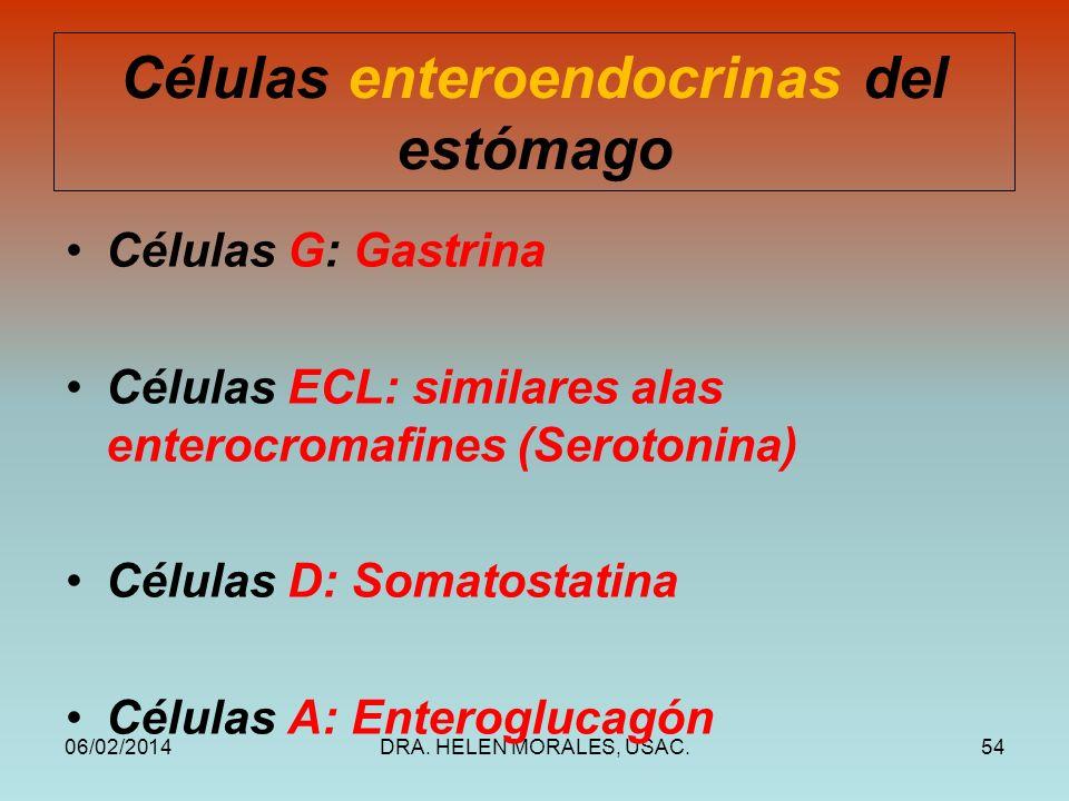 06/02/2014DRA. HELEN MORALES, USAC.54 Células enteroendocrinas del estómago Células G: Gastrina Células ECL: similares alas enterocromafines (Serotoni