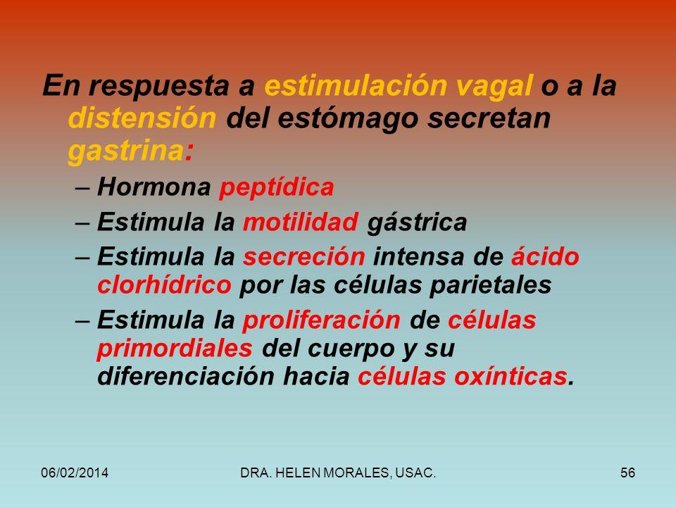 06/02/2014DRA. HELEN MORALES, USAC.56 En respuesta a estimulación vagal o a la distensión del estómago secretan gastrina: –Hormona peptídica –Estimula