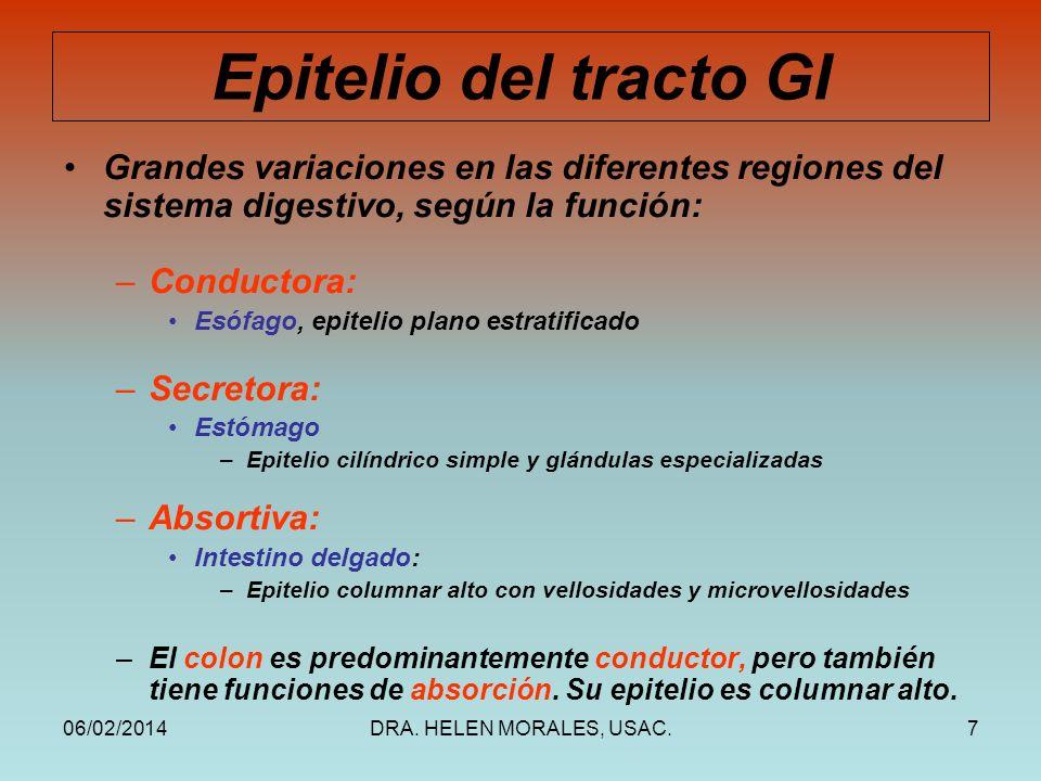 06/02/2014DRA. HELEN MORALES, USAC.7 Epitelio del tracto GI Grandes variaciones en las diferentes regiones del sistema digestivo, según la función: –C
