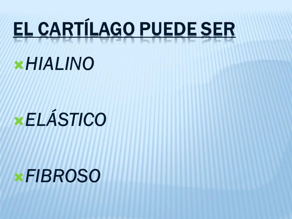 HIALINO ELÁSTICO FIBROSO