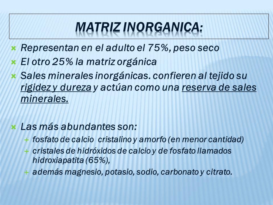 Representan en el adulto el 75%, peso seco El otro 25% la matriz orgánica Sales minerales inorgánicas.