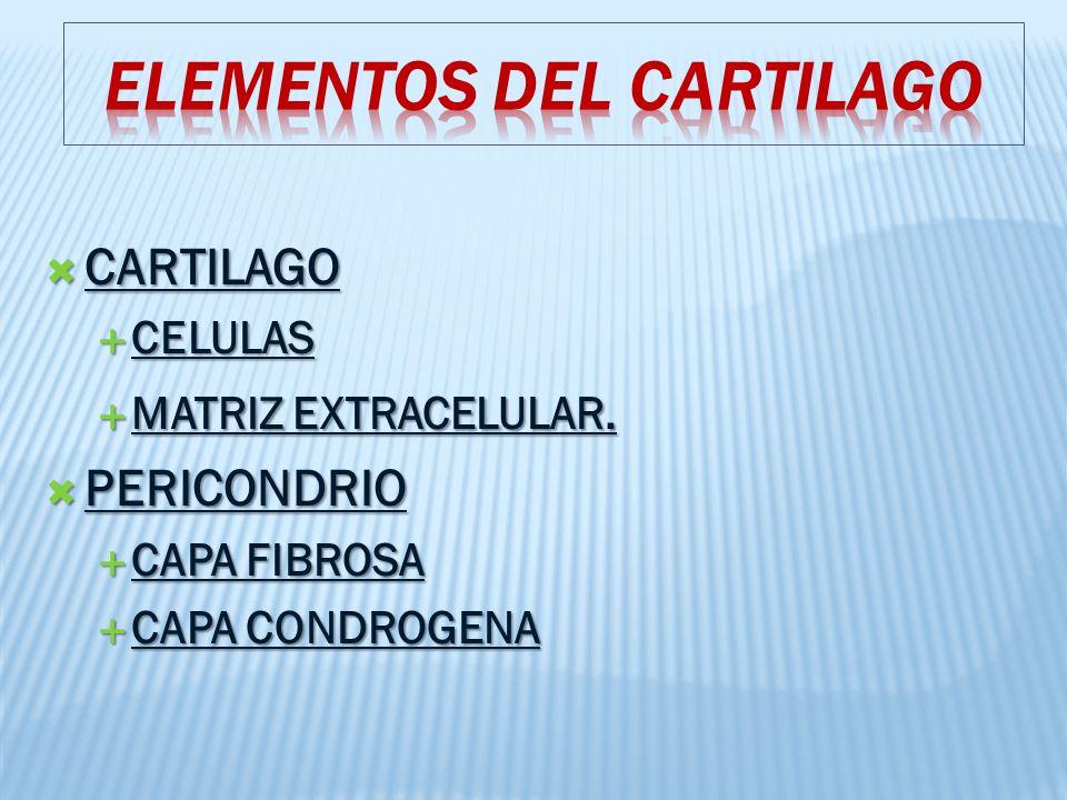 CARTILAGO CARTILAGO CELULAS CELULAS MATRIZ EXTRACELULAR.