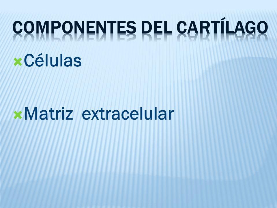 Células Matriz extracelular