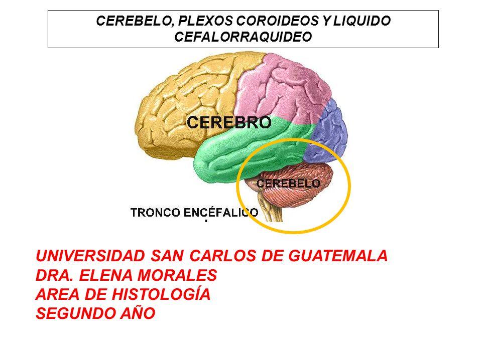 CEREBELO, PLEXOS COROIDEOS Y LIQUIDO CEFALORRAQUIDEO UNIVERSIDAD SAN CARLOS DE GUATEMALA DRA. ELENA MORALES AREA DE HISTOLOGÍA SEGUNDO AÑO