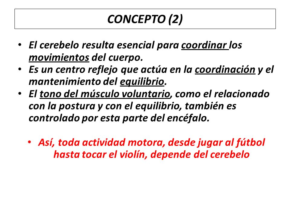 CONCEPTO (2) El cerebelo resulta esencial para coordinar los movimientos del cuerpo. Es un centro reflejo que actúa en la coordinación y el mantenimie